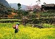 Hà Giang phát triển du lịch cộng đồng gắn với khôi phục nghề truyền thống