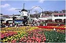 Chương Trình Hà Nội - Seoul - Đảo Jeju - Everland