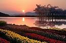Nhật Bản - Hàn Quốc Mùa Lá Đỏ 8 Ngày 7 Đêm
