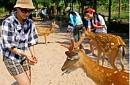 Tour Du Lịch Nha Trang - Du Ngoạn Trên Vịnh Nha Phu