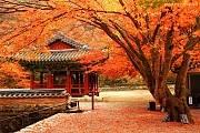 Tour Du Lịch Nhật Bản - Hàn Quốc Mùa Lá Đỏ 8 Ngày 7 Đêm
