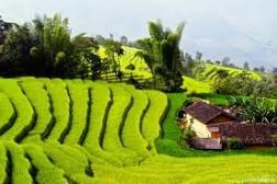 Du Lịch TP Hồ Chí Minh: Hà nội - Tp Hồ Chí Minh – Củ Chi - Cao Đài – Đà Lạt