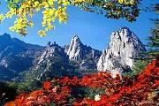Du Lịch Hàn Quốc: Hà Nội Seoul Nami Everland
