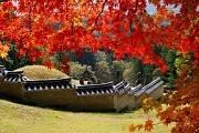 Du lịch Hàn Quốc: Seoul Jeju Everland Nami 6N5D giá khuyến mãi